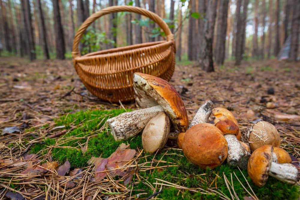 """Jornades micològiques """"Bosc i Taula"""" Naturlandia"""