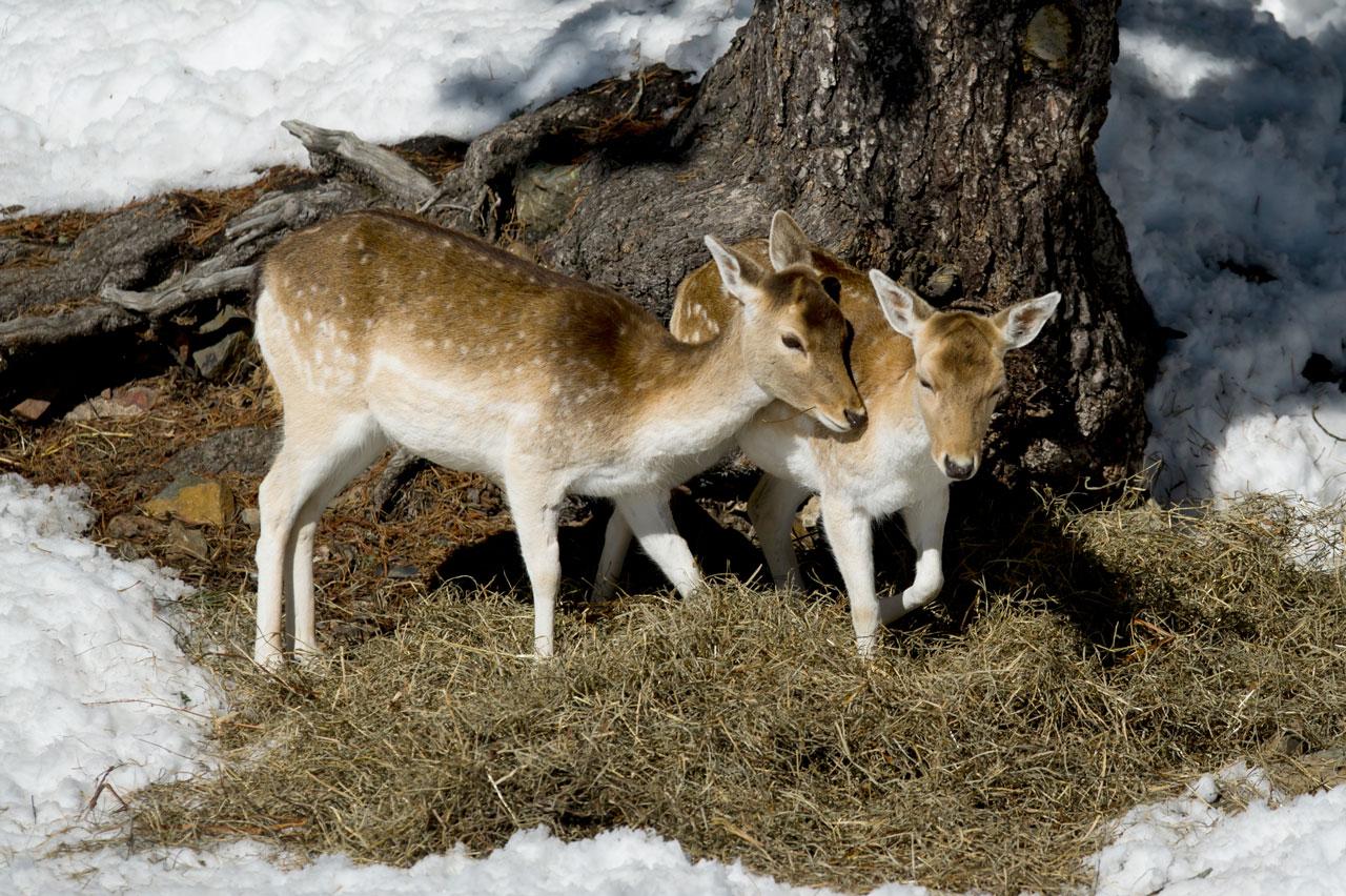 Parc d'animals - Naturlandia