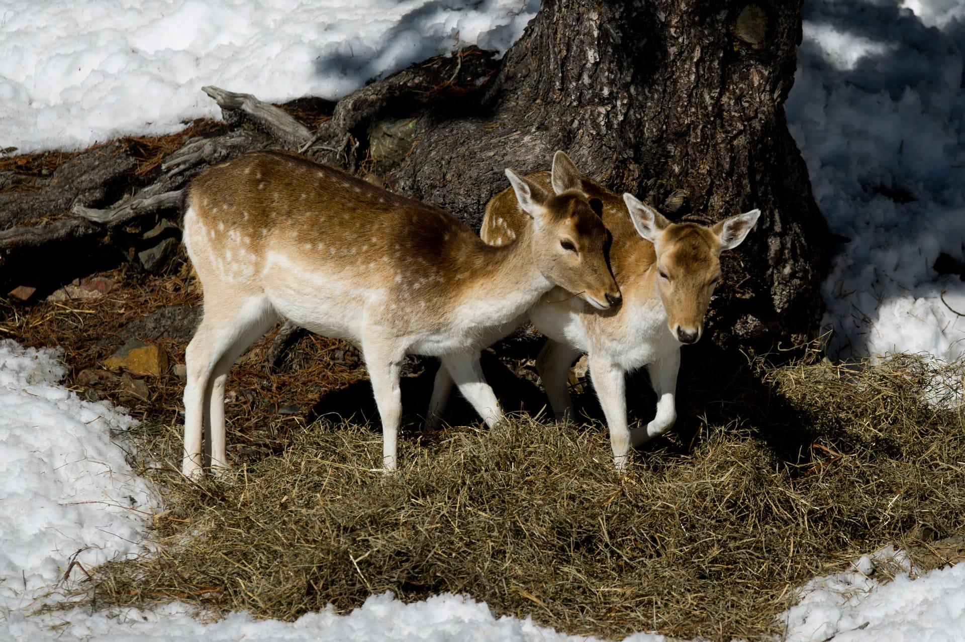 Parque de animales naturlandia for Animales de plastico para jardin