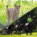 slider-parque-de-animales+caballos